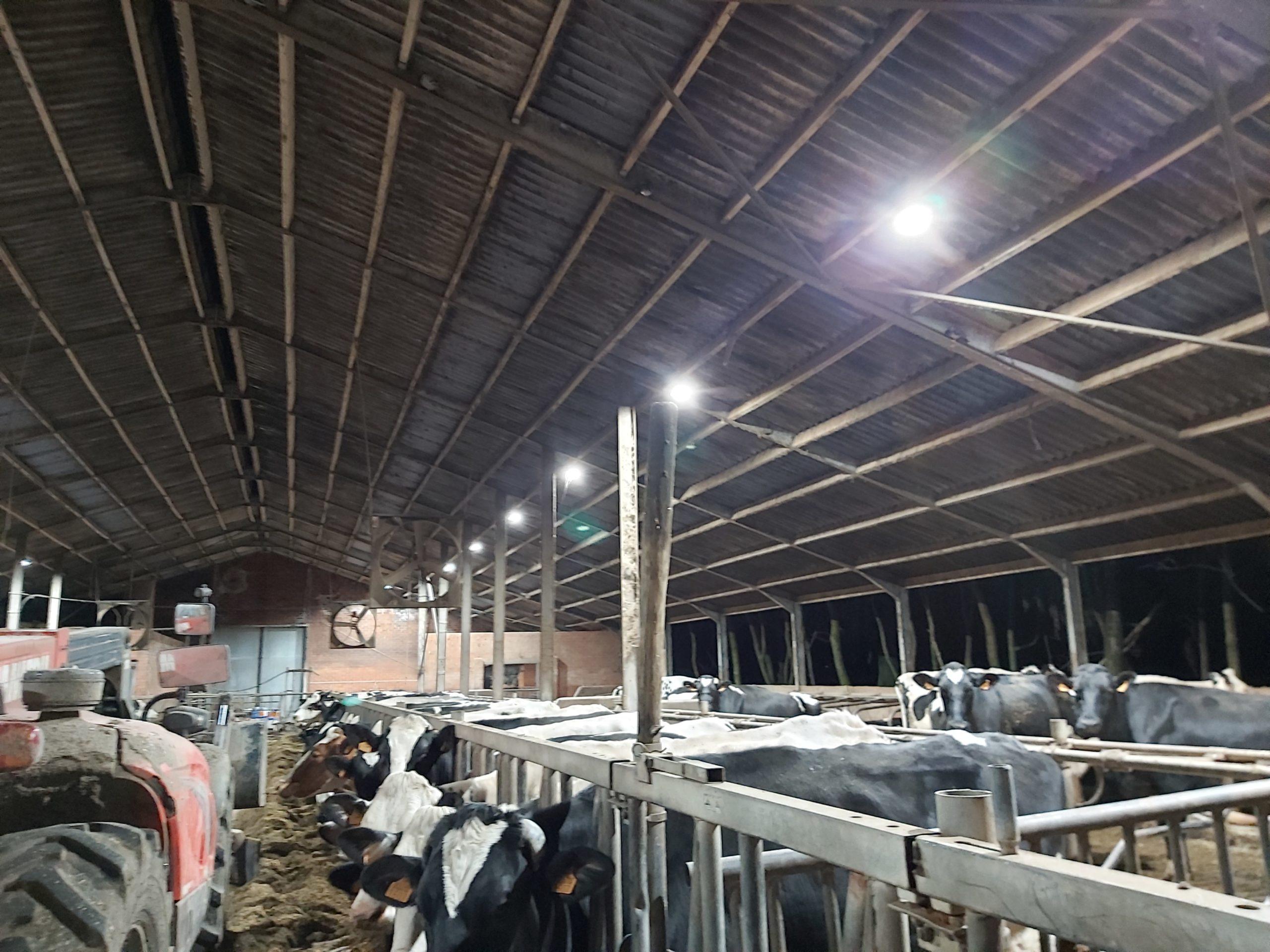 LED project bij landbouwbedrijf Van den Brande Pulderbos